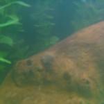 Украинцев призывают устроить двухдневный бойкот Facebook